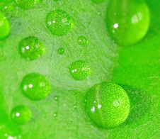 Free Water Drops Stock Image - 16829601