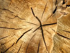 Free Cross-section Of An Old Tree Trunk Royalty Free Stock Photo - 16830145