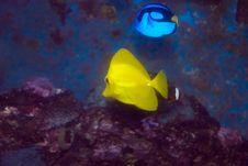 Free Marine Fish Stock Photos - 16830463