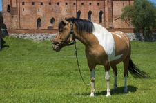 Free Horse With The Castle In The Background Stock Image - 16830631