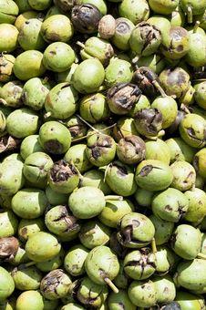 Free Green Walnuts Background Stock Photo - 16832390