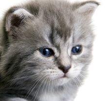 Free Kitten Royalty Free Stock Photography - 16832957