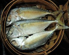 Free Thai Tuna Fish Royalty Free Stock Photography - 16833017
