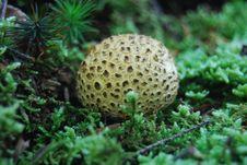 Free Round Mushroom Stock Photos - 16833233