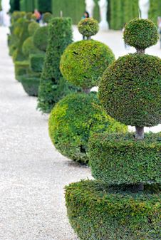 Free Garden In Versailles Royalty Free Stock Photography - 16833267