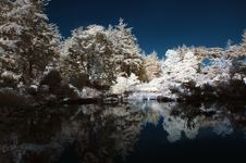 Free Infrared Pond With Trees Royalty Free Stock Photo - 16834375