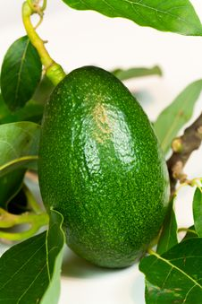 Avocado With Leaves On A White Background Stock Photography