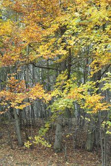 Free Autumn Stock Images - 16836564