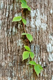 Free Green Plant On The Bark Royalty Free Stock Image - 16836566