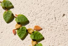 Free Plant On The Wall 1 Royalty Free Stock Photo - 16836615