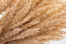Free Wheat Ears Stock Photography - 16837162