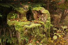 Free Autumn Tree Trunk Royalty Free Stock Photos - 16837568