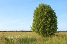 Free Tree In The Field Stock Image - 16838301