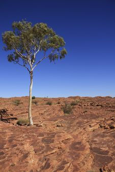 Free A Isolated Tree Stands In Kings Canyon Stock Photography - 16838802