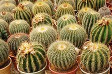 Free Cactus Plants Royalty Free Stock Photos - 16838948