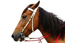 Free Horse On The Beach Royalty Free Stock Photography - 16839267