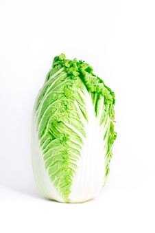 Free Fresh Cabbage Stock Photography - 16839922