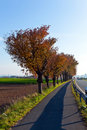 Free Bicycle And Pedestrian Lane Under Trees Stock Photography - 16840222