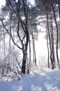 Free Trees In Hoarfrost Royalty Free Stock Photography - 16840477