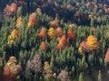 Free Mountainside With Autumn Trees Royalty Free Stock Photos - 16842868