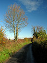 Free Rural Road Stock Image - 16846341