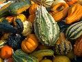 Free Halloween Pumpkin Field Background Image Royalty Free Stock Image - 16848946