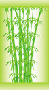 Free Stalks And Bamboo Leaves Stock Photography - 16849932