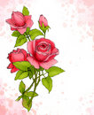 Free Drawing Of Red Rose Stock Image - 16849981