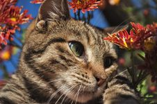 Free Portrait Of A Cat Stock Photography - 16840102