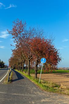 Bicycle And Pedestrian Lane Under Trees Royalty Free Stock Images