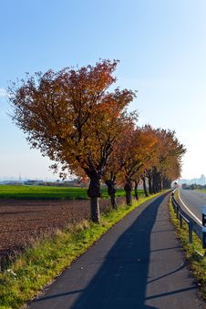 Bicycle And Pedestrian Lane Under Trees Stock Photography