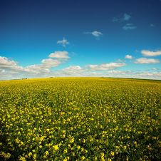 Free Yellow Field On A Blue Sky Stock Photos - 16840643