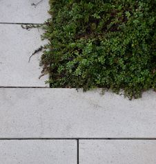 Free Stone Paving Next To Green Vegetation Royalty Free Stock Photography - 16840707