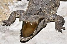 Free Crocodile Royalty Free Stock Photo - 16840725
