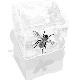 Free Ice Cube And Fly Stock Images - 16841374
