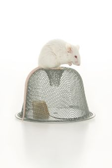 Free Mouse And Mousetrap. Stock Photo - 16841490