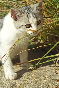 Free Playing Kitten. Stock Photo - 16841800