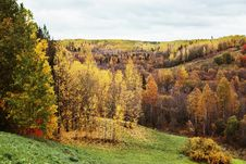 Free Autumn Forest Stock Images - 16842114