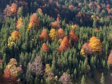 Free Mountainside With Autumn Trees Royalty Free Stock Photos - 16842868