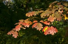 Free Autumn Detail Stock Photos - 16843683