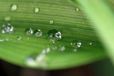Free Green Leaf Raindrop Stock Images - 16843954