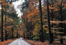 Free Autumn Road Royalty Free Stock Photos - 16845178