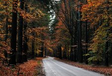 Free Autumn Road Royalty Free Stock Photography - 16845207