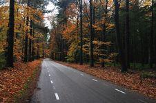 Free Autumn Road Stock Photos - 16845243