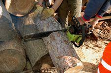 Free Lumberjack 003 Royalty Free Stock Photography - 16845527