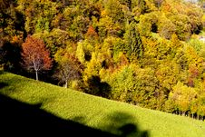 Free Autumn Forest Stock Image - 16845621