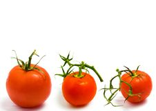 Free Tomatoes Themed Collage Royalty Free Stock Photos - 16845808