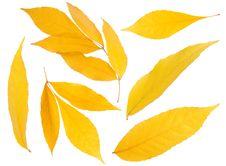Free Leaf Stock Images - 16846414