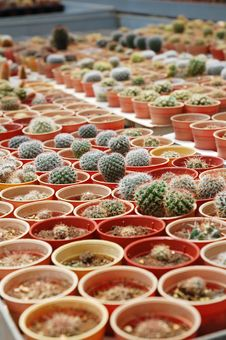 Free Cactus Plants Royalty Free Stock Photo - 16846665