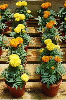 Free Flowers Royalty Free Stock Photo - 16846835